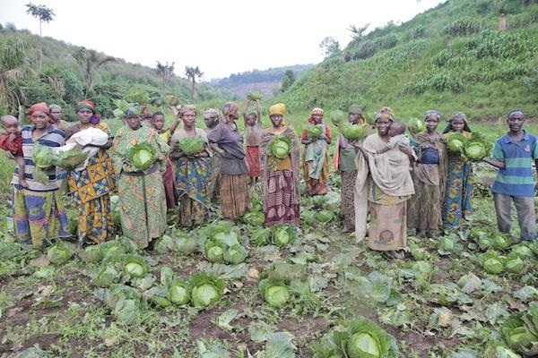 CabbageHarvest